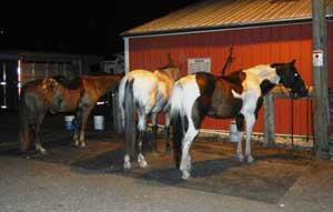 three horses standing on a hitching post mat